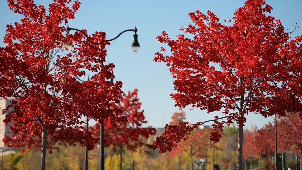 Bangor que incluye un jardín y hojas de otoño