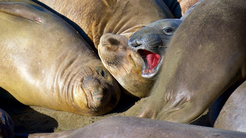 San Simeon showing marine life