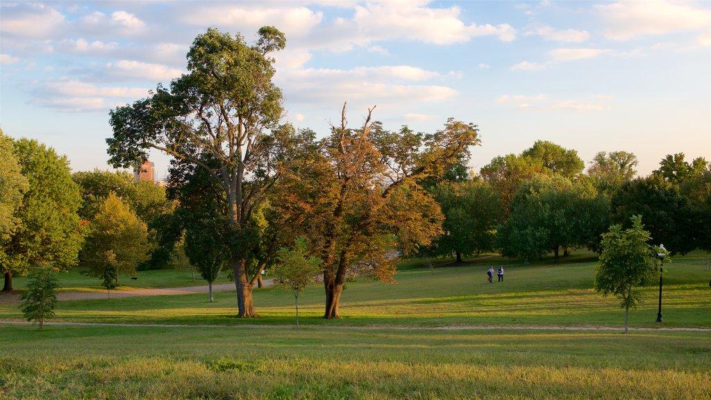 Patterson Park showing a sunset, landscape views and a park
