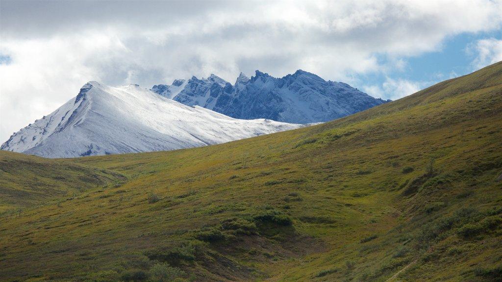 Parque Nacional de Denali mostrando vistas de paisajes, escenas tranquilas y montañas