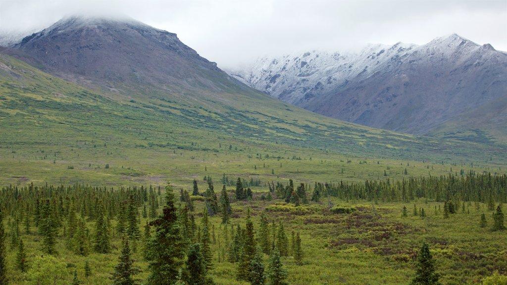 Parque Nacional de Denali que incluye escenas tranquilas, montañas y vistas de paisajes