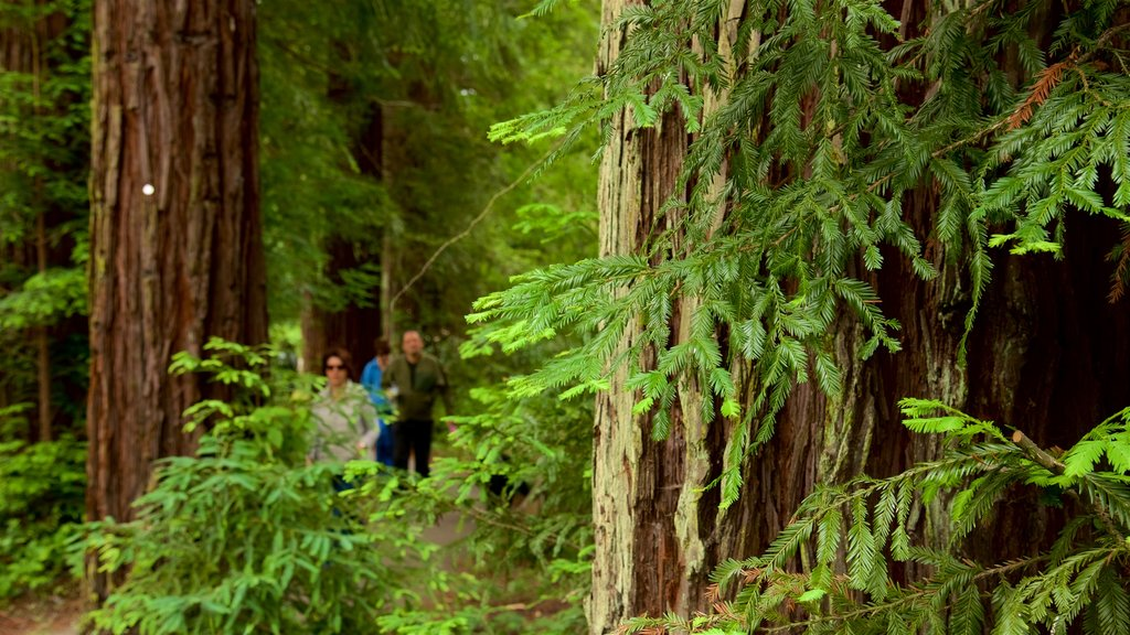 Redwood Regional Park which includes a park and forests
