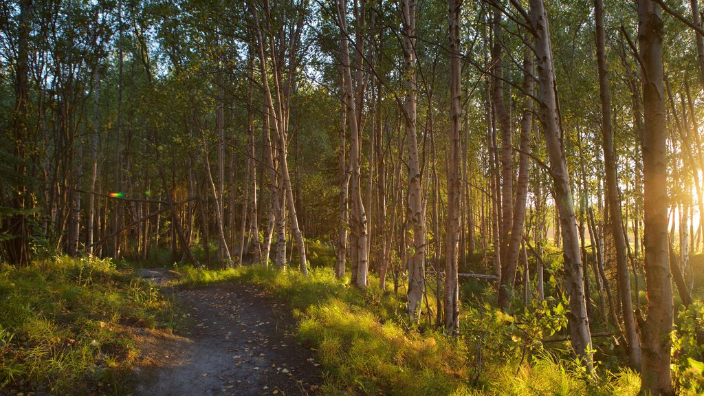 Tony Knowles Coastal Trail featuring a sunset and forests
