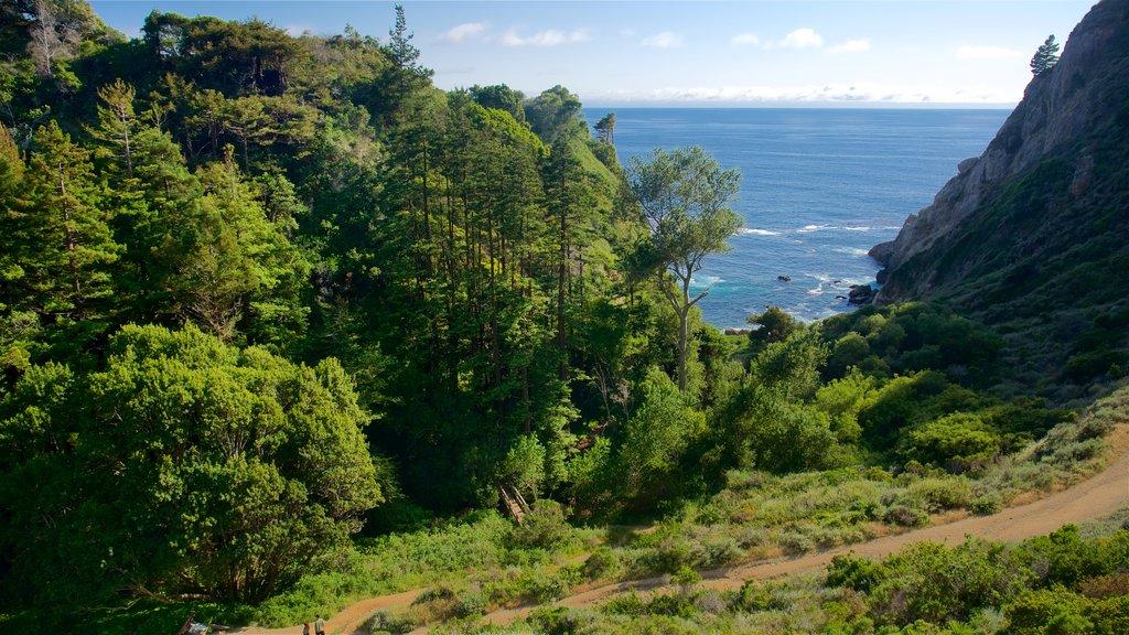 Cala Partington ofreciendo costa rocosa y vistas generales de la costa