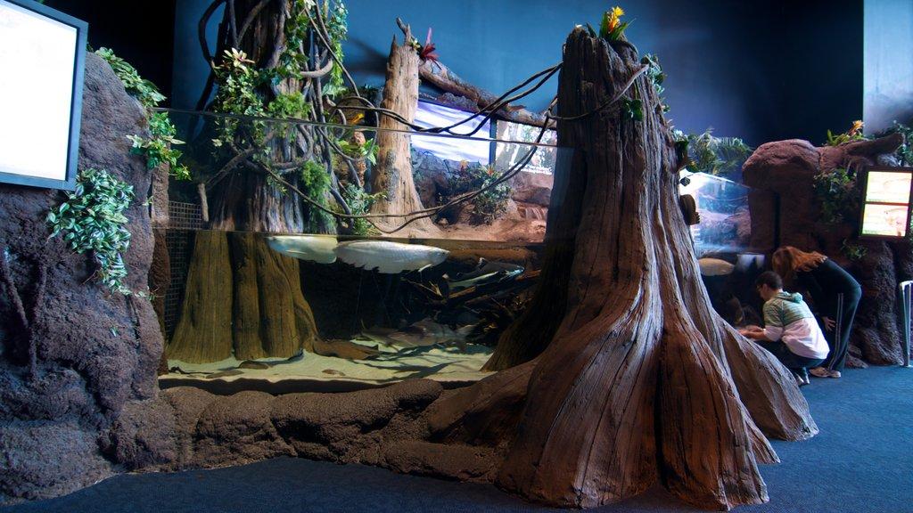 Ripley\'s Aquarium featuring art, marine life and interior views