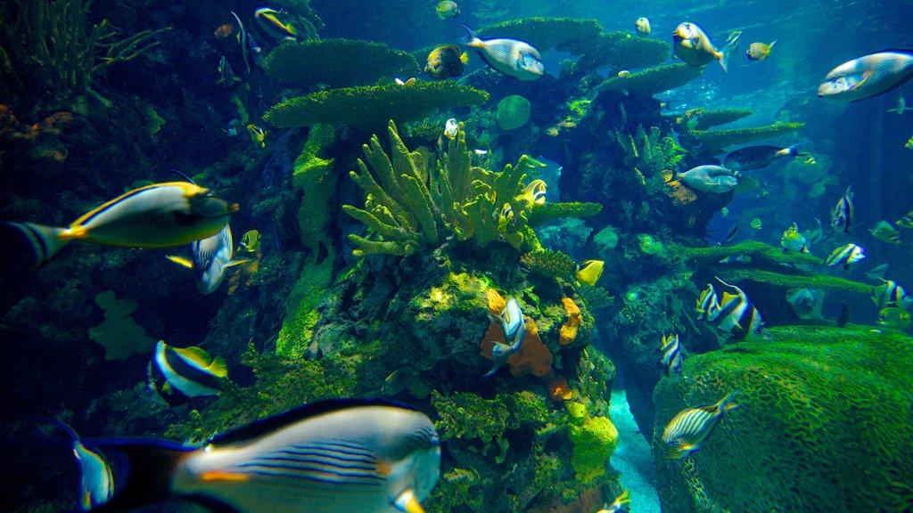 Ripley\'s Aquarium showing marine life and colorful reefs