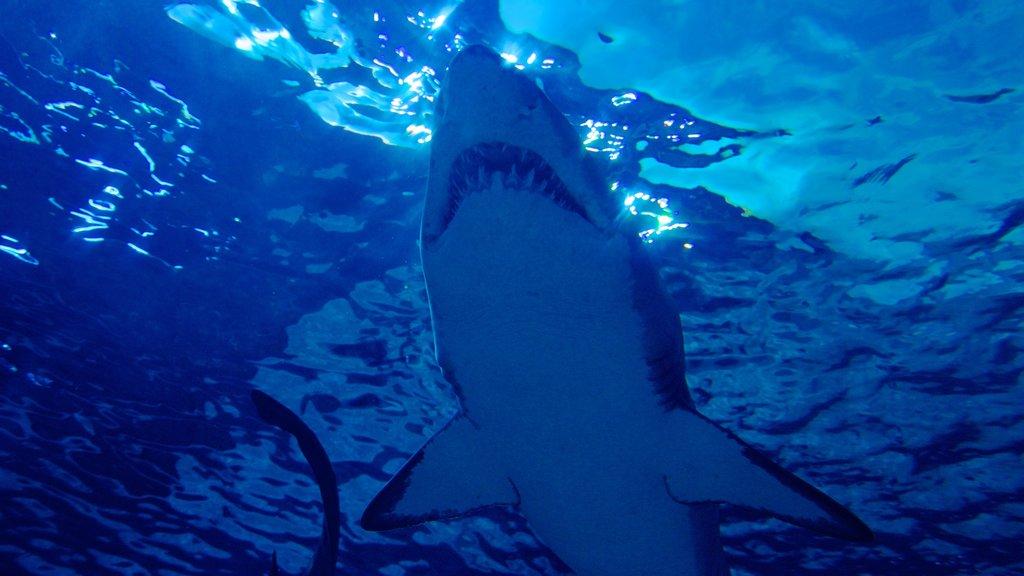 Ripley\'s Aquarium ofreciendo vida marina
