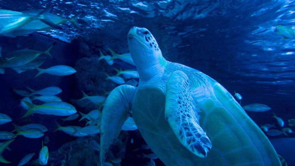 Ripley\'s Aquarium showing marine life