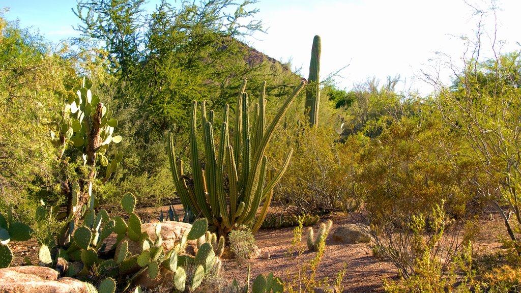 Desert Botanical Garden featuring landscape views, desert views and a park