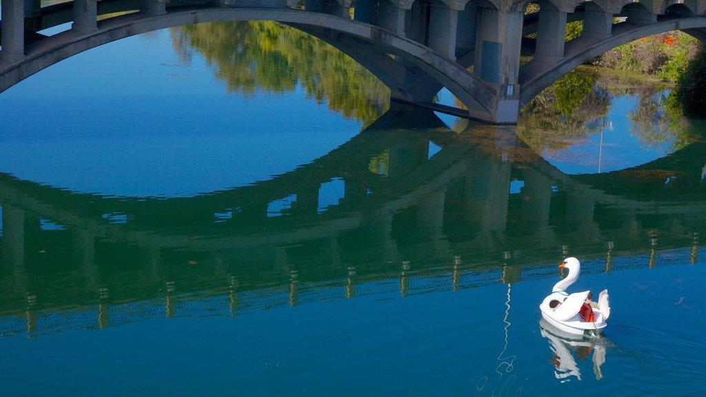Lago Lady Bird mostrando vida de las aves y un lago o abrevadero