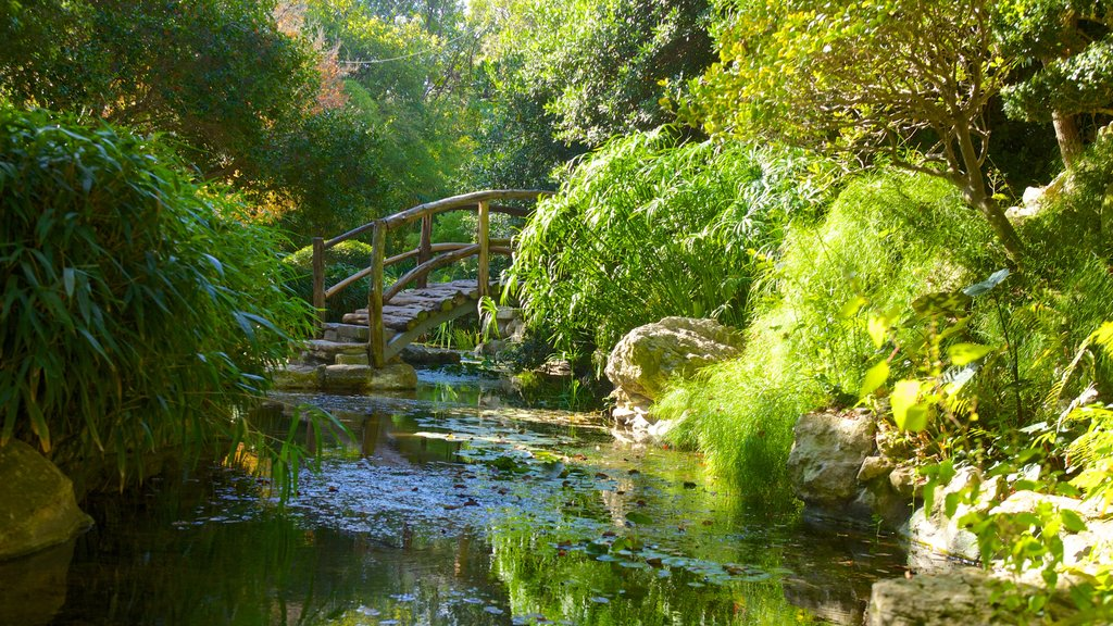 Zilker Botanical Garden which includes forest scenes, landscape views and a garden