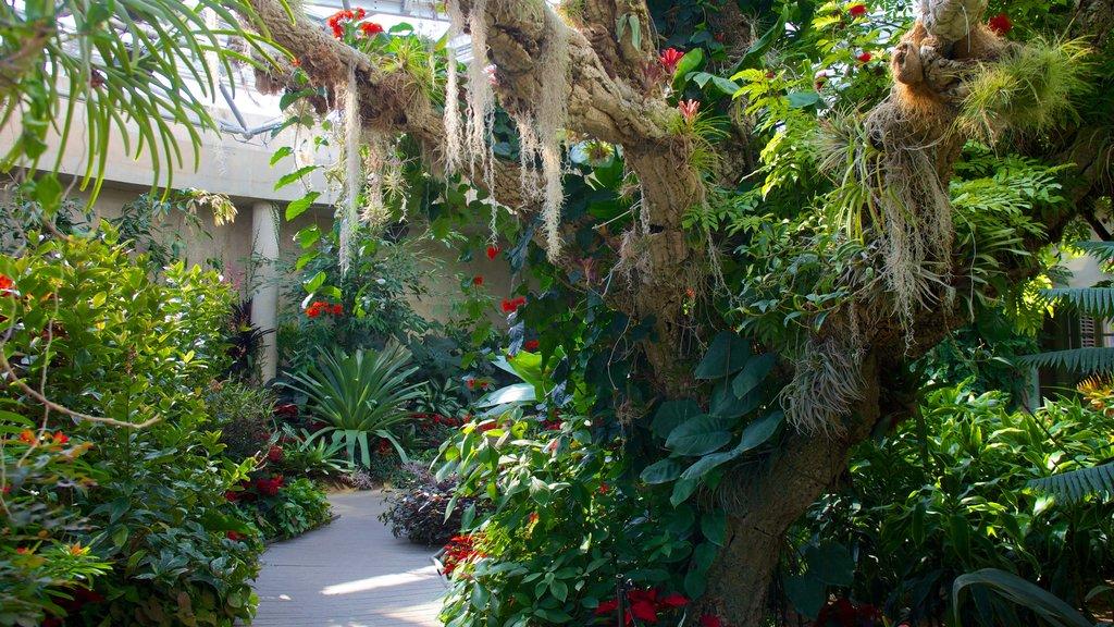 Jardín botánico de San Antonio que incluye flores silvestres, un jardín y flores