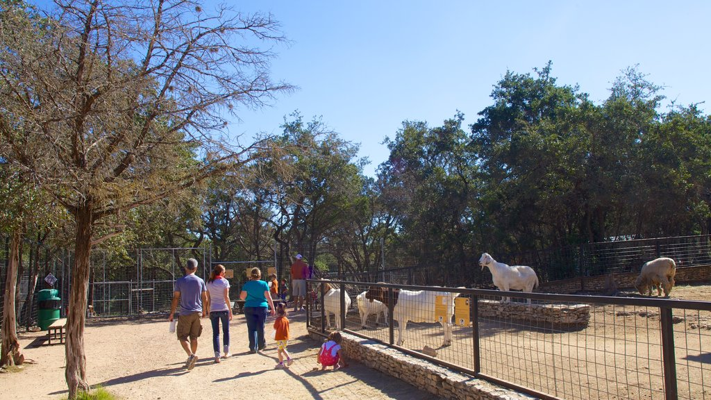 Zoológico de Austin ofreciendo un parque, animales del zoológico y animales tiernos