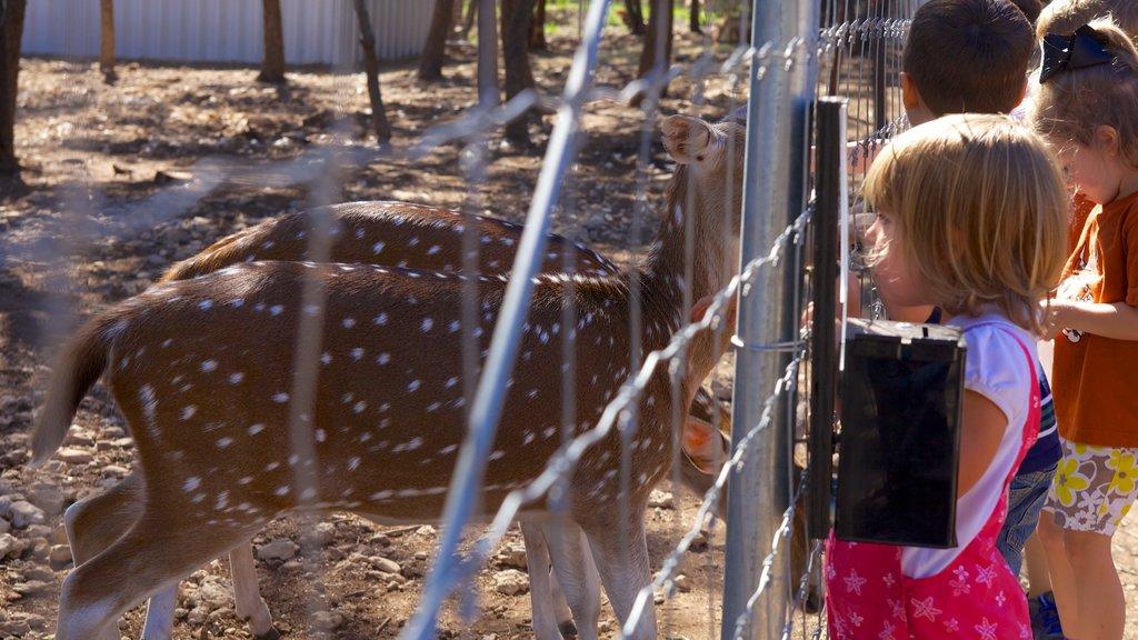 Zoológico de Austin ofreciendo animales tiernos y animales del zoológico y también niños