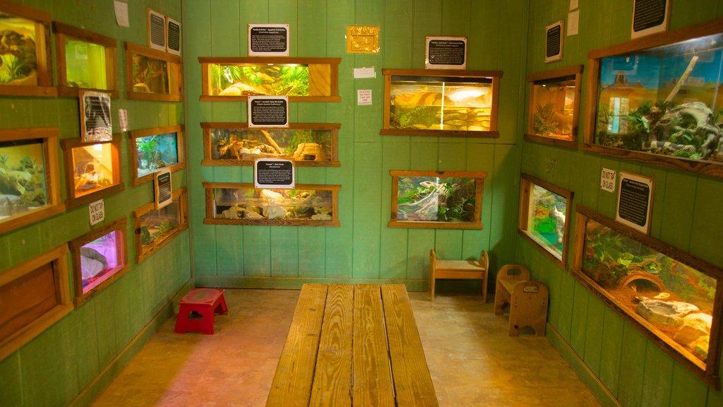 Zoológico de Austin que incluye animales del zoológico y vistas interiores