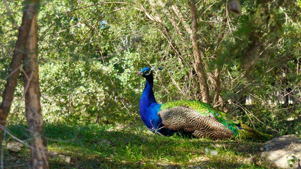 Zoológico de Austin que incluye vida de las aves y animales del zoológico