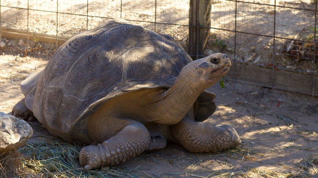 Zoológico de Austin mostrando animales terrestres y animales del zoológico
