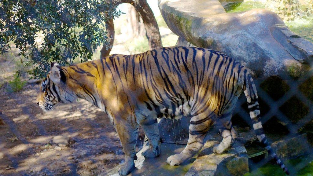 Zoológico de Austin ofreciendo animales peligrosos y animales del zoológico