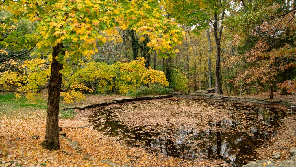 Cheekwood Botanical Gardens and Museum of Art which includes landscape views, fall colors and a garden