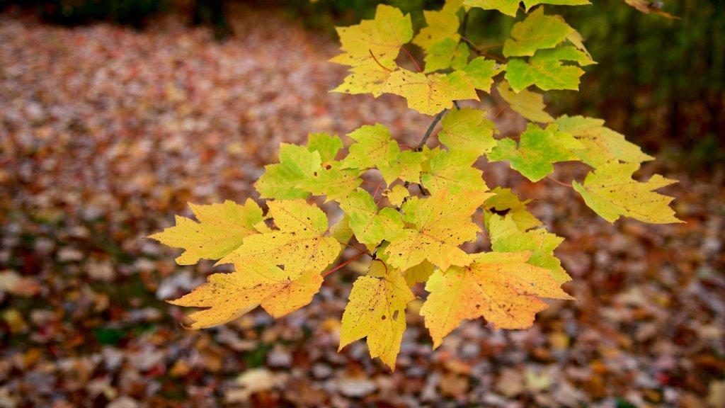 North Conway que incluye bosques
