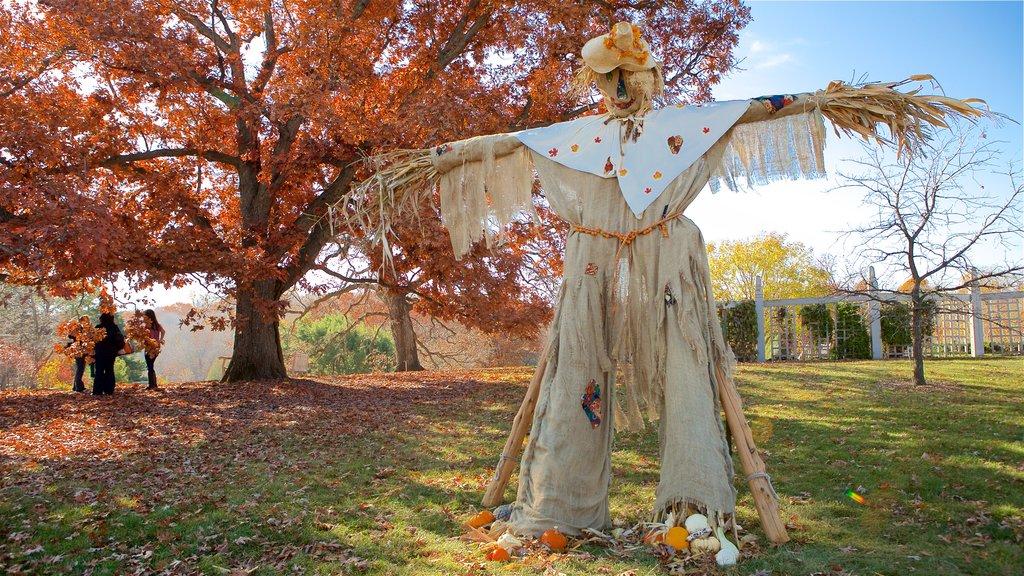 Minnesota Landscape Arboretum showing a park, autumn leaves and outdoor art