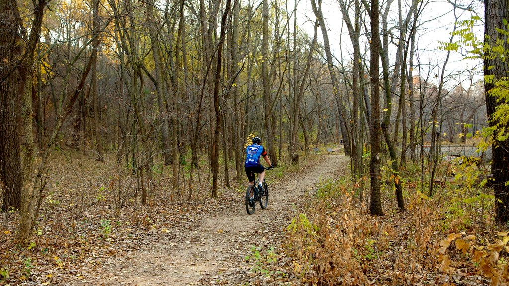 Minnehaha Park which includes forests, fall colors and cycling