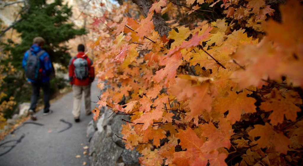 Timpanogos Cave National Monument which includes fall colors