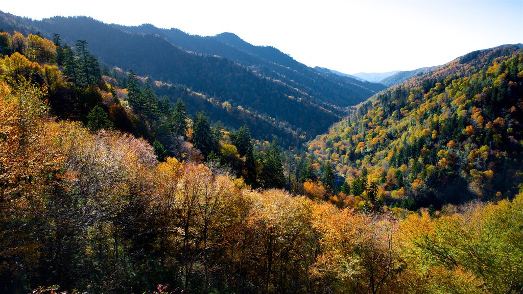 Great Smoky Mountains National Park featuring landscape views, tranquil scenes and fall colors