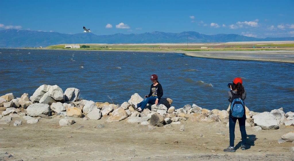Great Salt Lake State Park showing general coastal views as well as an individual femail