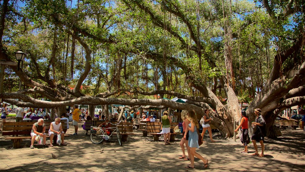 Lahaina which includes a park as well as a large group of people