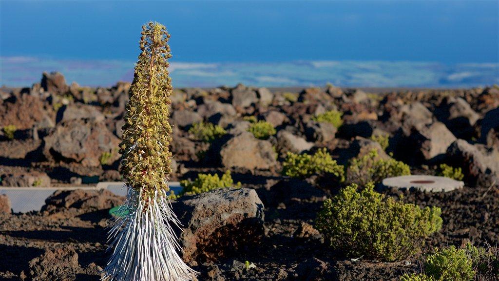 Haleakala National Park showing general coastal views and wildflowers