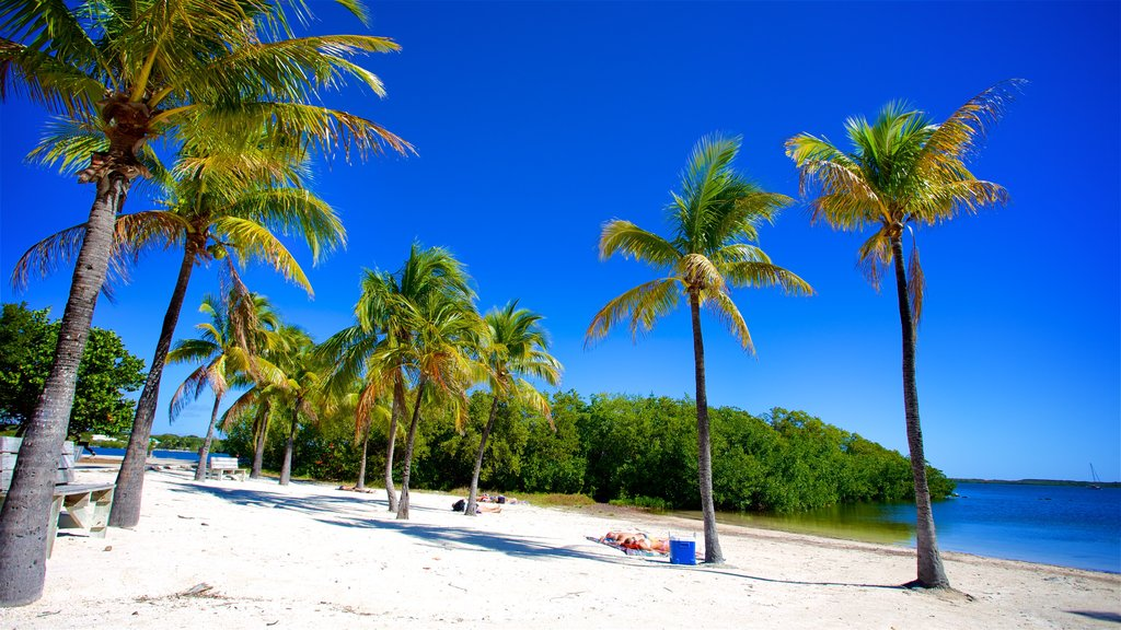 John Pennekamp Coral Reef State Park which includes tropical scenes, a sandy beach and general coastal views