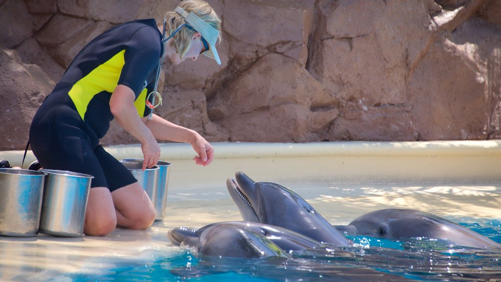 Las Vegas which includes marine life as well as an individual femail