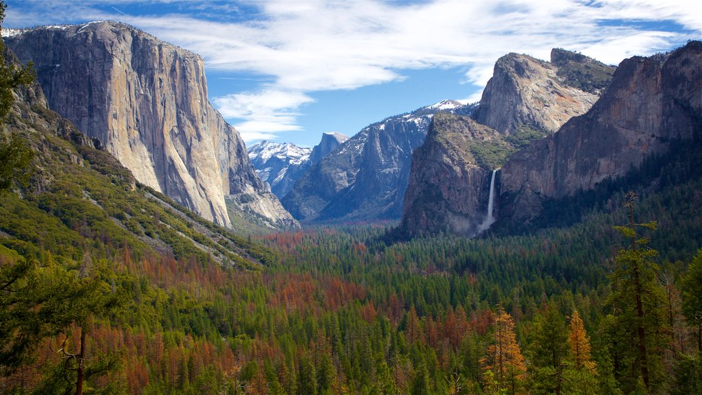 Yosemite National Park featuring tranquil scenes, landscape views and a gorge or canyon