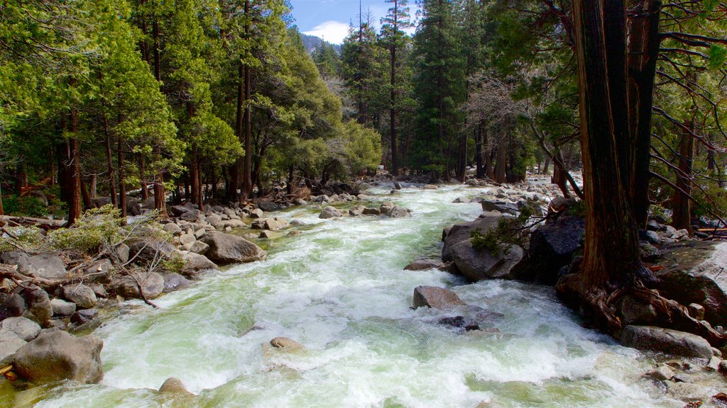 Yosemite National Park featuring forests, rapids and a river or creek