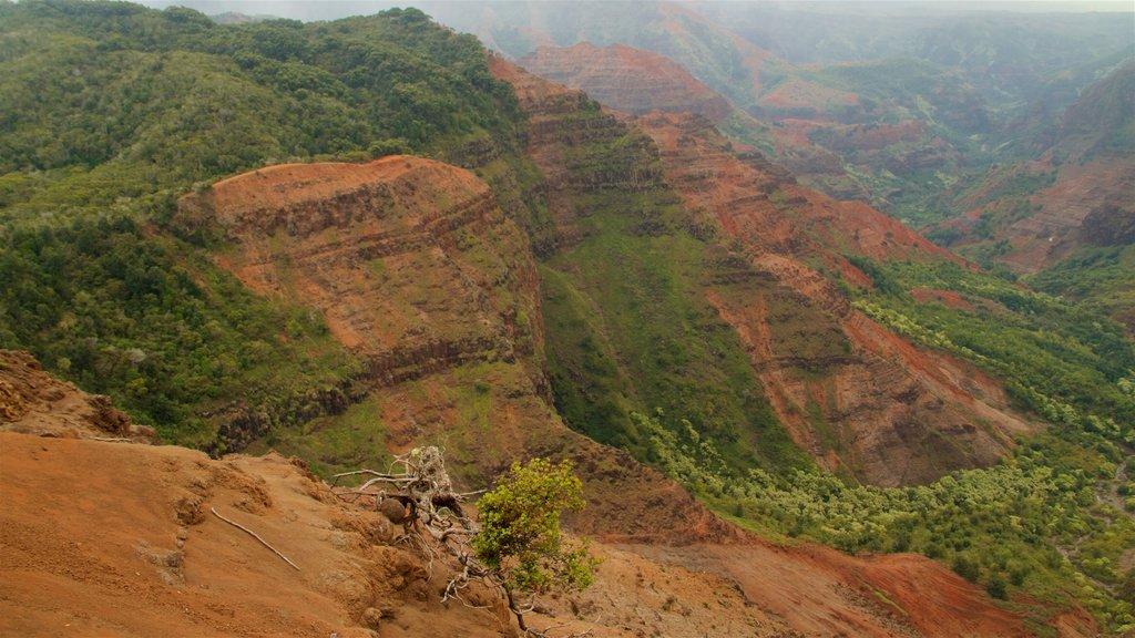Waimea Canyon which includes a gorge or canyon and tranquil scenes
