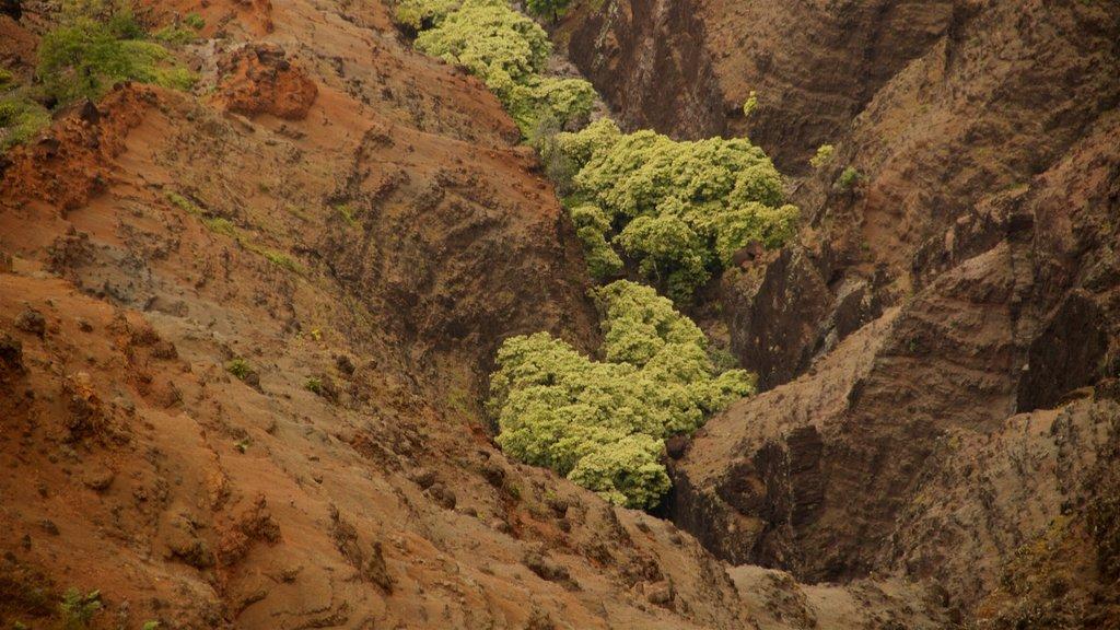 Waimea Canyon showing a gorge or canyon