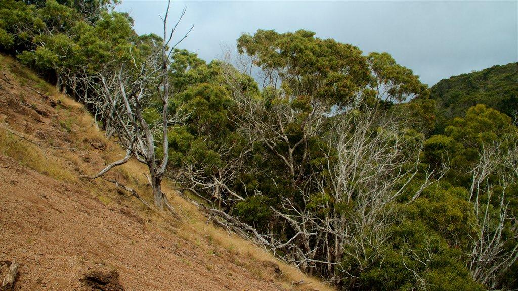Waimea Canyon showing tranquil scenes