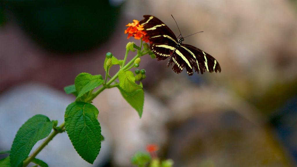 Hershey Gardens showing wildflowers and animals