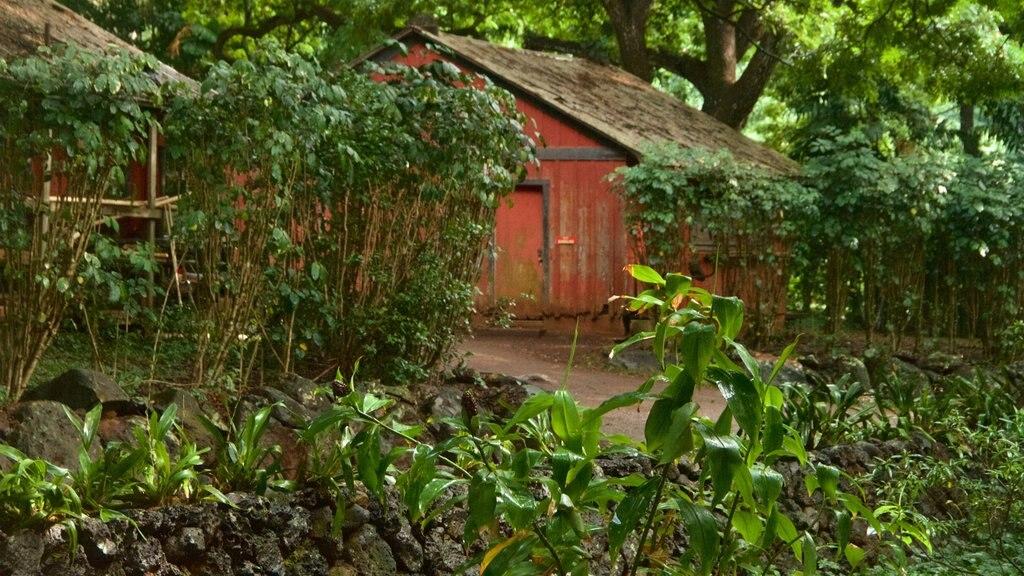 Allerton Botanical Garden featuring a park