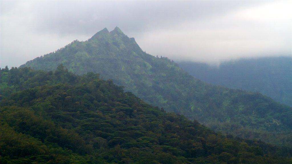 Mirador de Hanalei Valley que incluye vistas de paisajes, escenas tranquilas y neblina o niebla