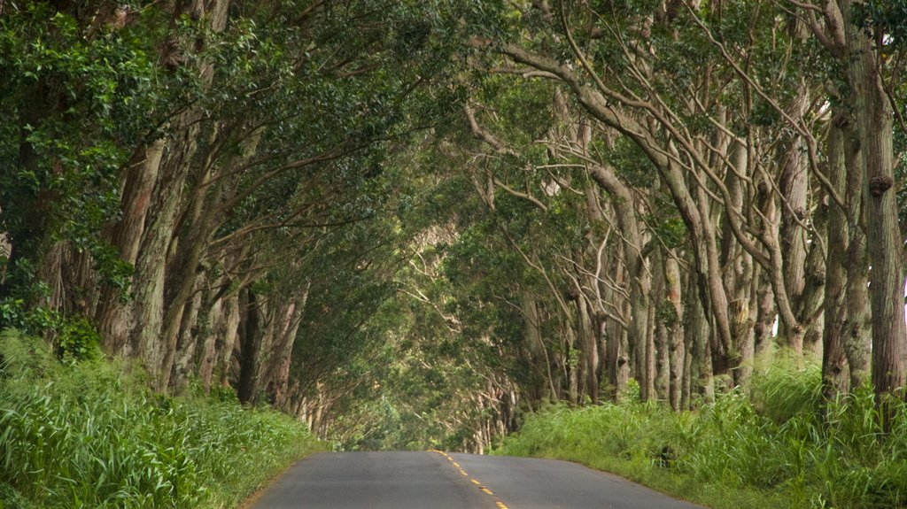 Tree Tunnel featuring forests