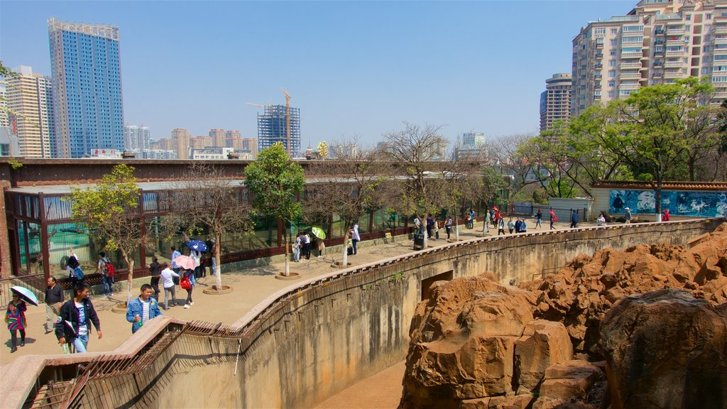 Kunming Zoo showing a high rise building and a city as well as a small group of people