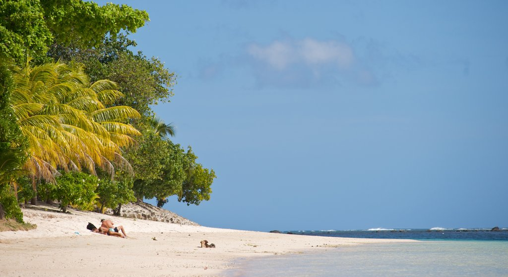 Samoa which includes general coastal views and a beach as well as a couple