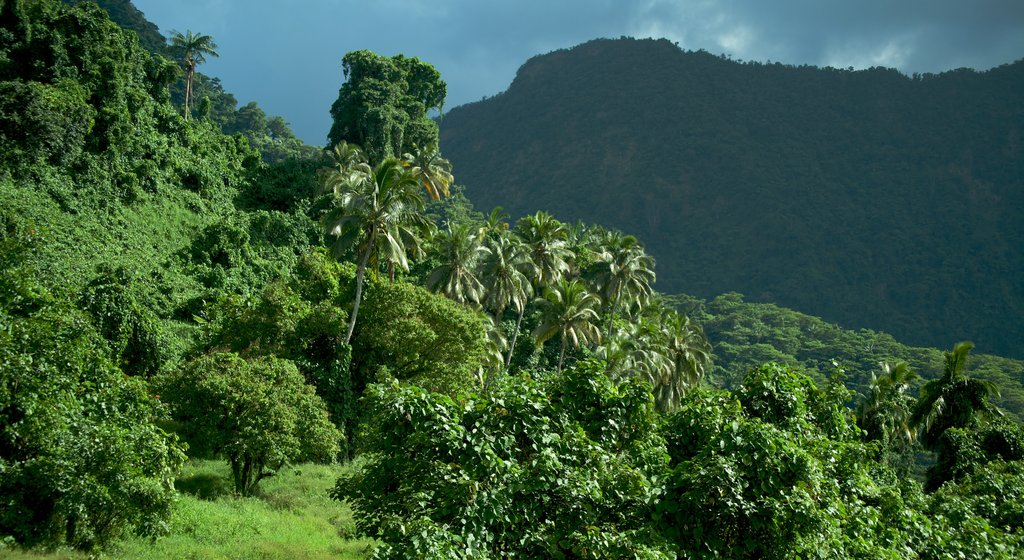 Samoa which includes tranquil scenes, forest scenes and landscape views