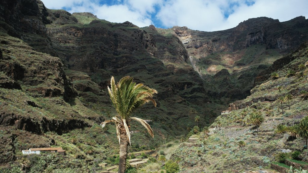 La Gomera which includes landscape views and a gorge or canyon