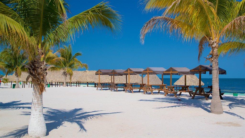Bonita Beach showing a sandy beach, tropical scenes and general coastal views