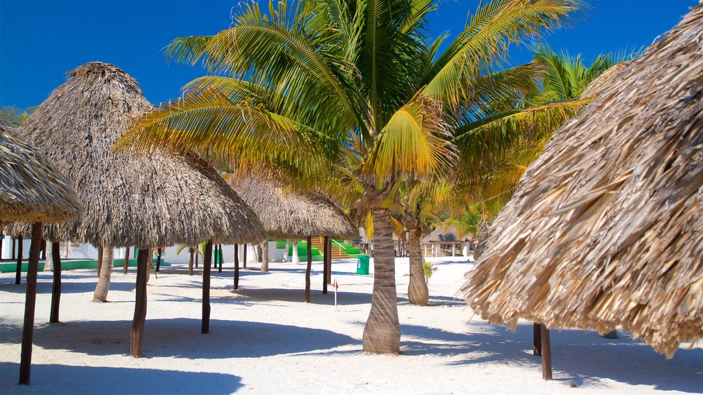 Bonita Beach showing a sandy beach and tropical scenes