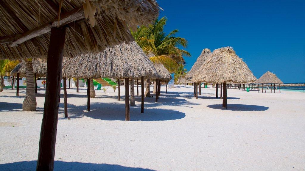 Bonita Beach featuring a beach, tropical scenes and general coastal views
