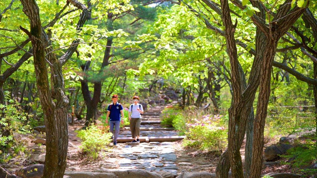 Geumjeongsan mostrando escenas forestales y también una pareja